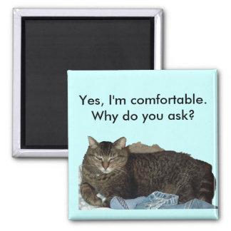 Cómodo en el imán del gato del lavadero