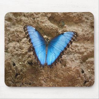 Comon Blue Morpho Butterfly Mouse Pad
