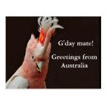 ¡Compañero de Gday! saludos de Australia Postal