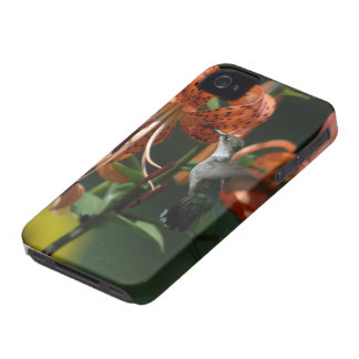 Compañero del caso del colibrí iPhone 4 Case-Mate carcasas