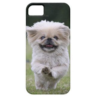 Compañero del caso del iphone 5 del perro de Pekin iPhone 5 Coberturas