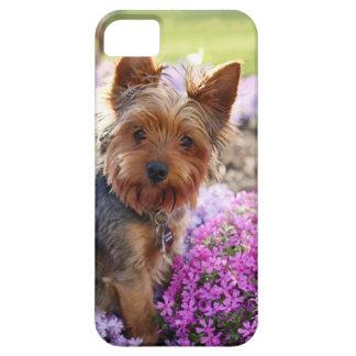 Compañero del caso del iphone 5 del perro de Yorks iPhone 5 Cárcasas