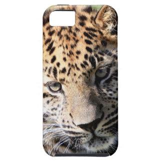 Compañero lindo del caso del iphone 5 de la foto iPhone 5 carcasa