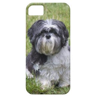Compañero lindo i/d del caso del iphone 5 de la iPhone 5 carcasa