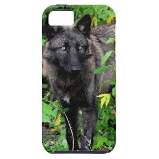 Compañero negro del caso del iPhone 5 del lobo Funda Para iPhone 5 Tough