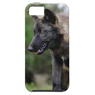 Compañero negro del caso del iPhone 5 del lobo iPhone 5 Fundas