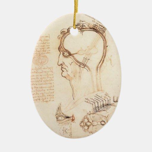 Comparación de Leonardo Vinci- de la piel y de la  Ornamente De Reyes