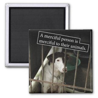 Compasivo al imán cuadrado de los animales