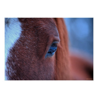Compassionate Eye of a Loving Sorrel Horse Posters