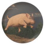 Competir con el cerdo plato