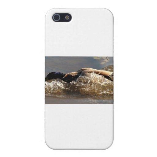 Competir con el pato silvestre iPhone 5 cárcasas
