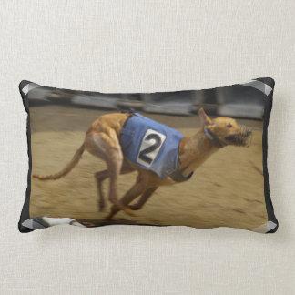 Competir con la almohada del galgo