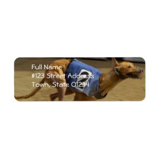 Competir con la etiqueta de correo del perro del etiquetas de remite