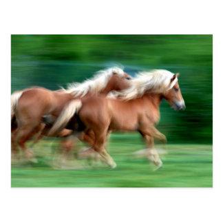 Competir con la postal de los caballos del Palomin