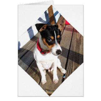 Compinche - rata Terrier Tarjetón