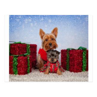Compinches del navidad tarjetas postales
