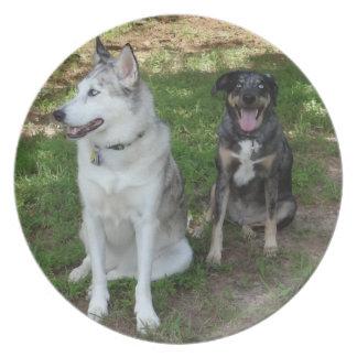 Compinches del perro de Catahoula y de Ausky Plato