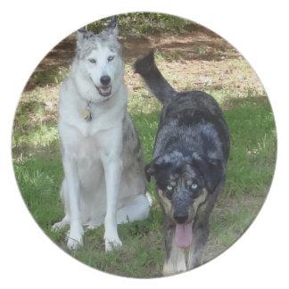 Compinches del perro de Catahoula y de Ausky Platos