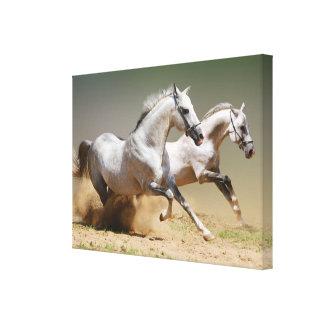 Compita con los caballos del viento impresiones en lona estiradas
