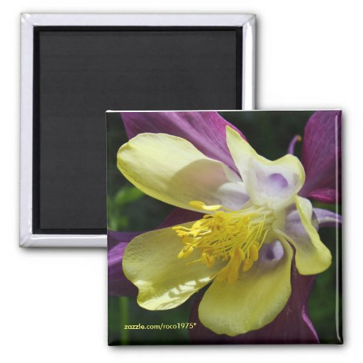 complete me 2 inch square magnet