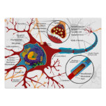 Complete Neuron Cell Diagram Poster