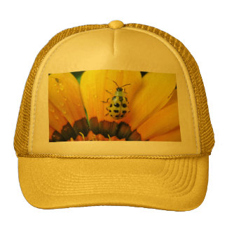 Composition in yellow trucker hat