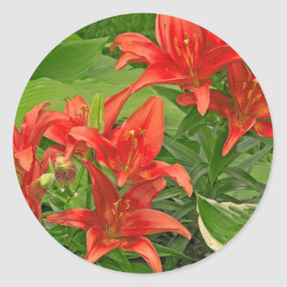 Composure Bright Red Lilies Classic Round Sticker
