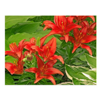 Composure Bright Red Lilies Postcard