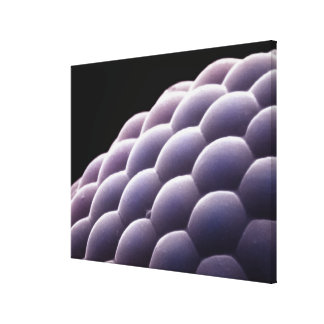 Compound eye from an insect stretched canvas prints