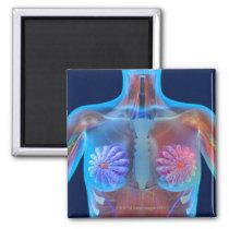 Computer artwork representing breast cancer, magnet