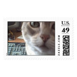 Computer Cat Looking for Mouse Stamp