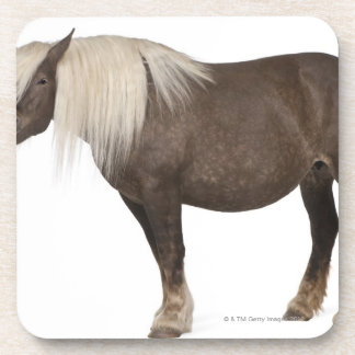 Comtois horse is a draft horse - Equus caballus Drink Coasters