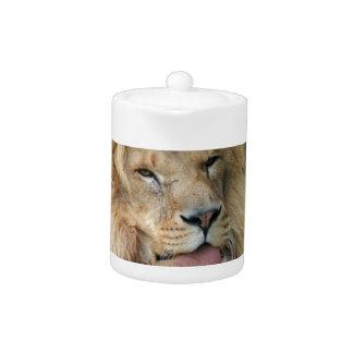 Con clase africano lindo del safari del león