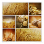 Conceptos de Wheat.Harvest. Collage del cereal Póster