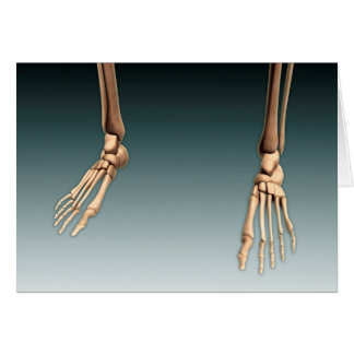 Conceptual Image Of Bones In Human Legs And Feet Greeting Cards