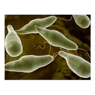 Conceptual Image Of Euglena 3 Postcard
