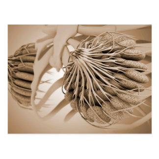 Conceptual Image Of Female Breast Anatomy 5 Postcard