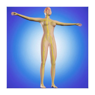 Conceptual Image Of Female Nervous System Canvas Print