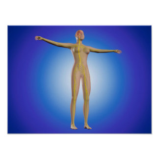 Conceptual Image Of Female Nervous System Poster