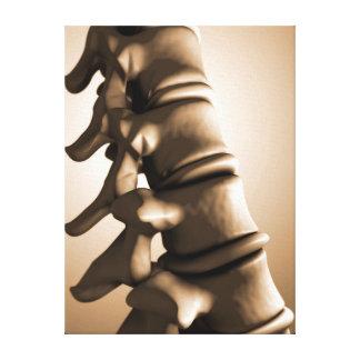 Conceptual Image Of Human Backbone 4 Canvas Prints
