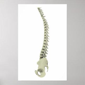 Conceptual Image Of Human Backbone 7 Poster