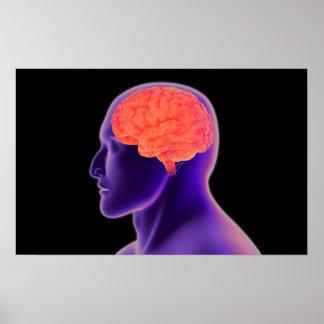 Conceptual Image Of Human Brain 1 Poster