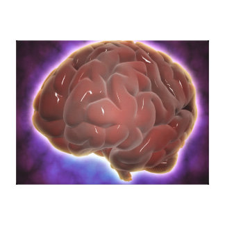 Conceptual Image Of Human Brain 6 Canvas Print