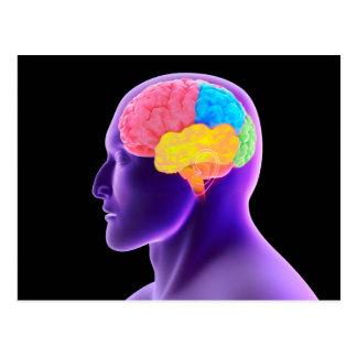 Conceptual Image Of Human Brain 7 Postcard
