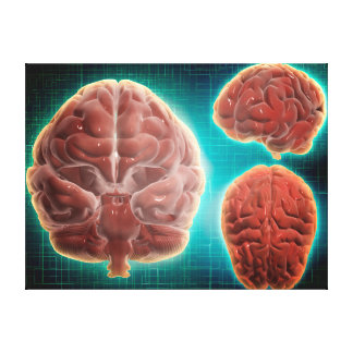 Conceptual Image Of Human Brain At Different Canvas Print