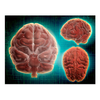 Conceptual Image Of Human Brain At Different Postcard
