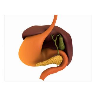 Conceptual Image Of Human Digestive System 4 Postcard
