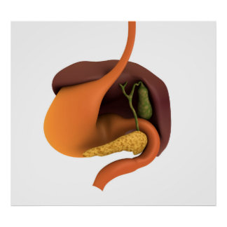 Conceptual Image Of Human Digestive System 4 Poster