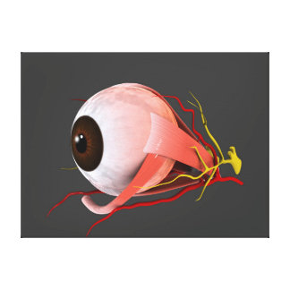 Conceptual Image Of Human Eye Anatomy 5 Canvas Print