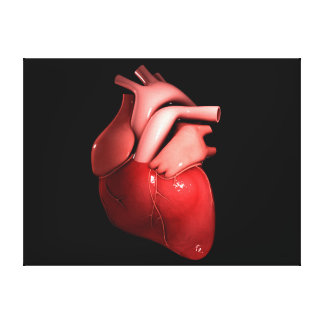 Conceptual Image Of Human Heart 1 Gallery Wrap Canvas